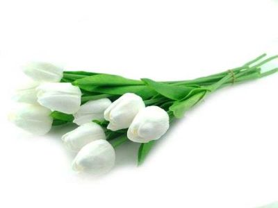 Çiçek Islak Lale Beyaz
