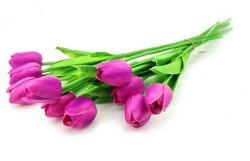 - Çiçek Islak Lale Fuşya