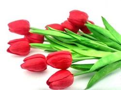 - Çiçek Islak Lale Kırmızı