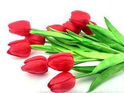 Çiçek Islak Lale Kırmızı