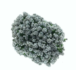 - Cipso Çiçek Gümüş