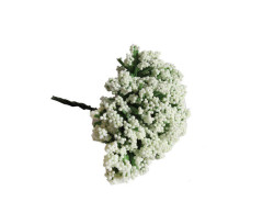 - Cipso Çiçek Krem