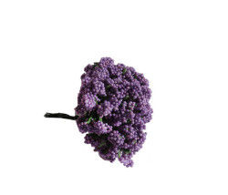 Cipso Çiçek Lila