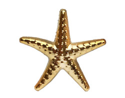 - Deniz Yıldızı Minik Altın