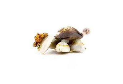Kaplumbağa Natural