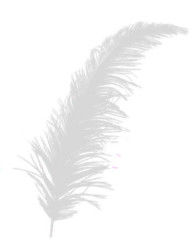Tüy Beyaz