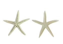 - Plastik Naturel Yıldız